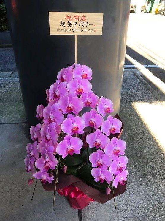 アートライフで起英ファミリーに贈らせていただいた胡蝶蘭。