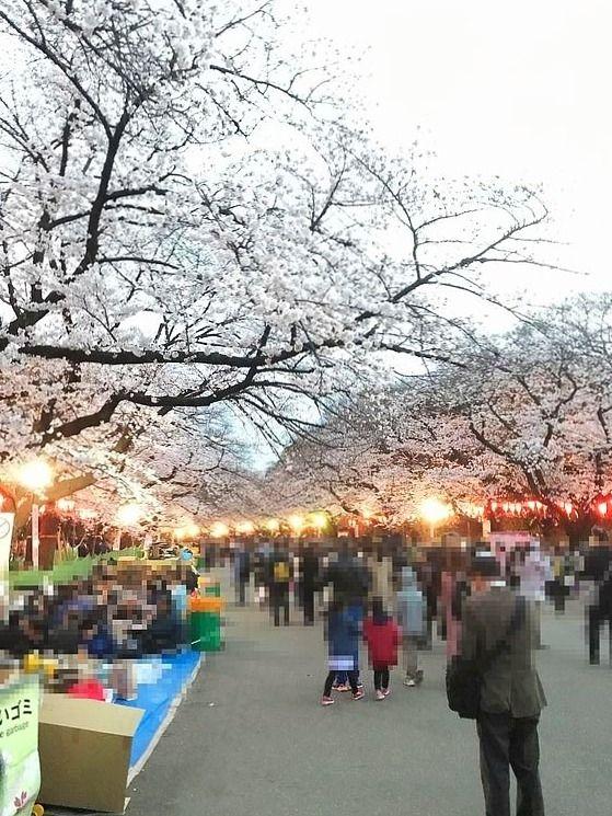 上野公園で開催されている桜まつり2019の様子です。