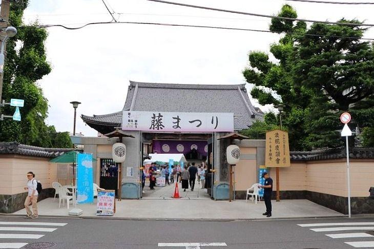 アートライフで、東本願寺で行われている藤まつりを紹介します。