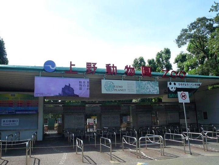 アートライフで、上野動物園で開催される真夏の夜の動物園を紹介します。