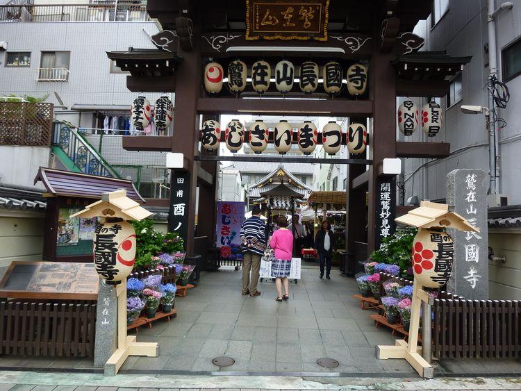長國寺いきいきあじさい祭入口