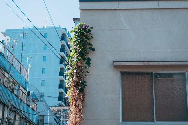 【台東区】外壁塗装工事費用の助成が受けられます【住宅・事業所省エネアクション支援制度】