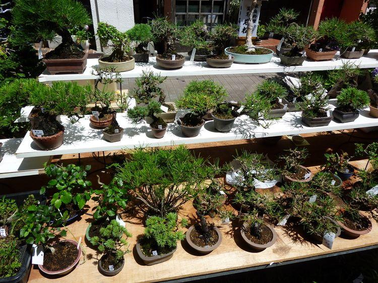 お富士さんの植木市、露店の写真です。