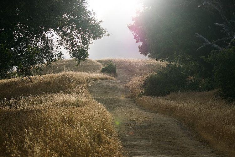 畦道が続いている写真です。