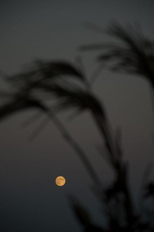 ススキの奥に満月が見える写真です。