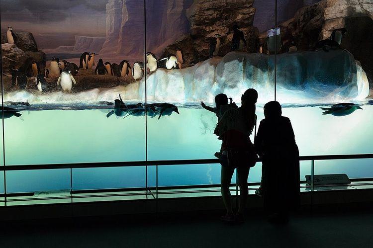 3人家族が水族館のペンギンコーナーを見ている写真です。